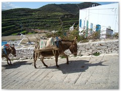 Working Donkeys - Tholaria