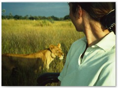 Lion Safaris Now Available - Okavango Delta, Botswana
