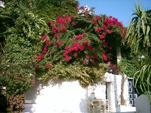 Amorgos accommodation
